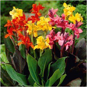 jarné záhradné kvety
