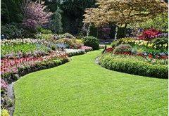 pekné usporiadanie rastlín na záhrade