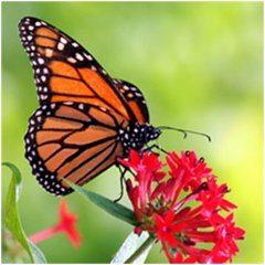 pekný motýľ na záhrade