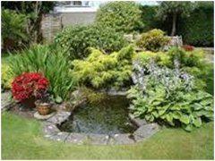 ako správne osadiť rastlinami záhradné jazierko