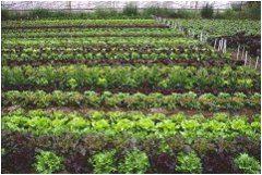 ako striedať zeleninu na záhrade