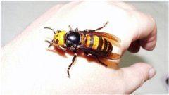 ošetrenie pokožky po poštípaní hmyzom