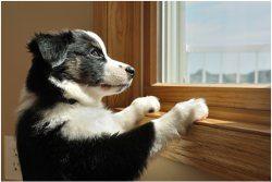 pes a pozeranie sa z okna