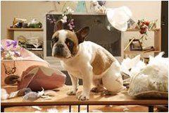 pes sám doma a ničneie vecí