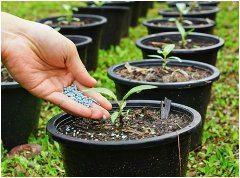 správny výber hnojív pre rastliny