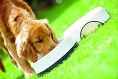 strava pre šteňa