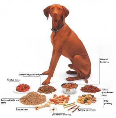 ako správne kŕmiť psa aby nebol obézny