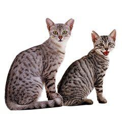 kastrácia mačky