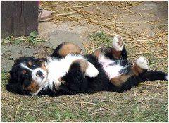 metabolizmus šteňata a krmenie