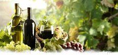 spoznať dobré víno