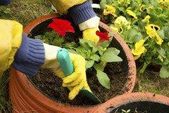 čo robiť v apríli na záhrade