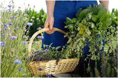 domáce sušenie rastlín