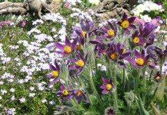jar v záhradke