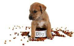 jedlo pre šteňa