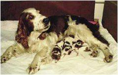 pomoc sučke pri pôrode
