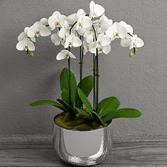 ako pestovať orchidey