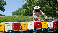 ako začať včelárenie