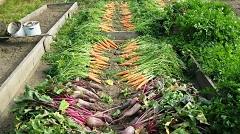 ako zazimovať zeleninovú záhradu