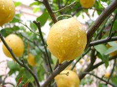 citróny