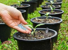 hnojenie rastlín v kvetináčoch
