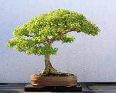 malý stromček
