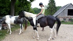 nasadnúť na koňa