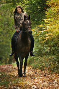 nasadnutie na koňa