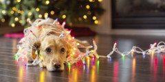 obdobie Vianoc bez stresu