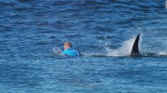 plavec a návod ako sa nestať obeťou žraloka