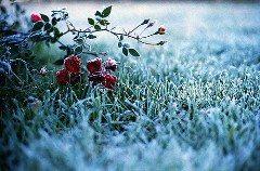 starostlivosť v mrazoch