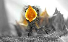 vtáča a ako sa zachovať pri najdení vtáčieho mláďaťa