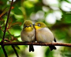 vtáči rodičia
