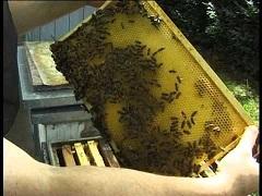 začať včelárenie