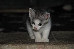 zaobstarať mačku