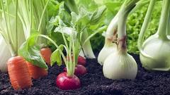 zazimovanie zeleninovej záhrady