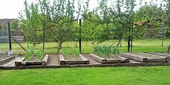 zeleninovú záhradu