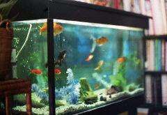 čo robiť s akváriom a touto záľubou počas dovolenky