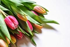 čo robiť s rezanými kvetmi