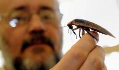chcete sa zbaviť švábov
