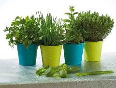 návod ako pestovať bylinky v zime