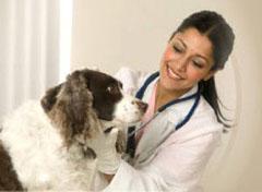 s falošnou graviditou treba za veterinárom