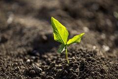 typy maštaľného hnoja
