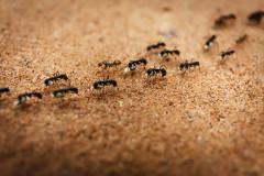 zatočiť s mravcami