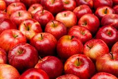 výroba jablčného muštu