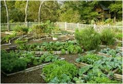 ako naplánovať zeleninovú záhradu