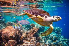 zaujímavé potápanie na Maldivách