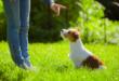 Ako naučiť psa základné povely?
