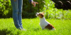 Ako naučiť psa základným povelom