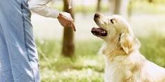Ako správne cvičiť psa