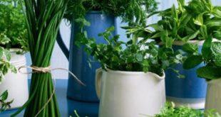 Ako v prírode vyberať bylinky do veľkonočnej plnky